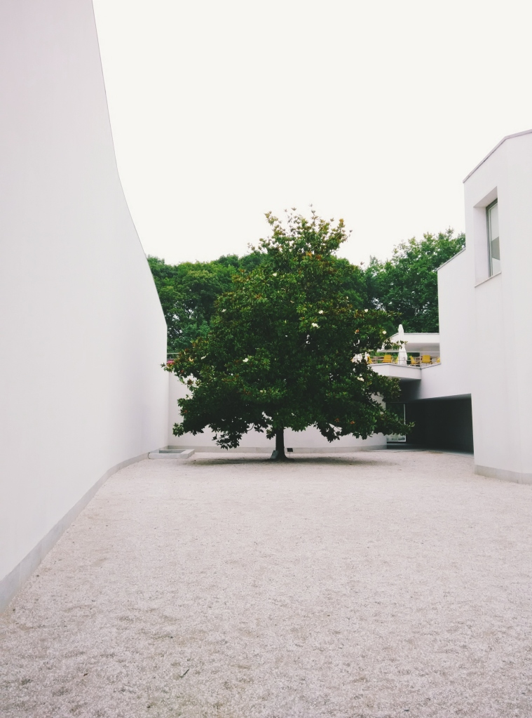 Lonely tree at Serralves